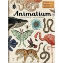 Animalium Dwie Siostry